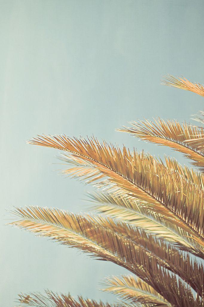 thesthr: Photos, Blue Sky, Dreams, Summer Beach, Palms Trees, Palm Trees, Beach Photography, Art Projects, Sun