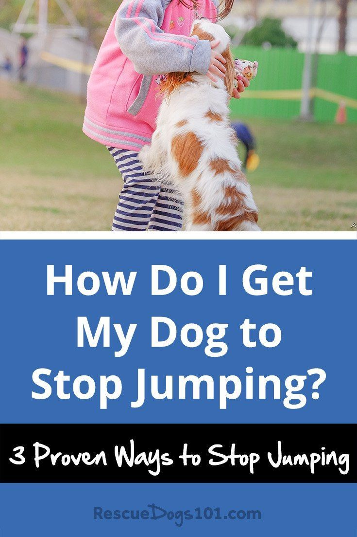 3 Ways to Stop a Dog from Jumping - Nothing more e…