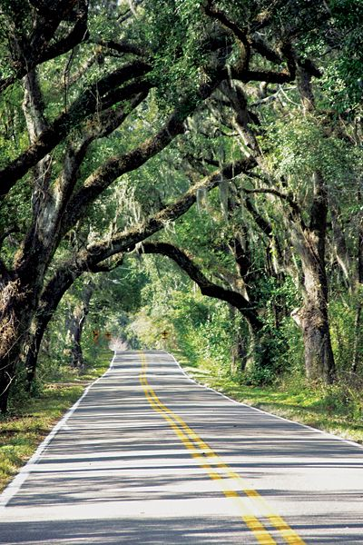 Tallahassee is noted for its canopy roads, created by the branches of centuries' old live oak trees. No cutting or pruning allowed. This is Miccosukee Road.