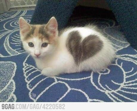 Heart Kitty!