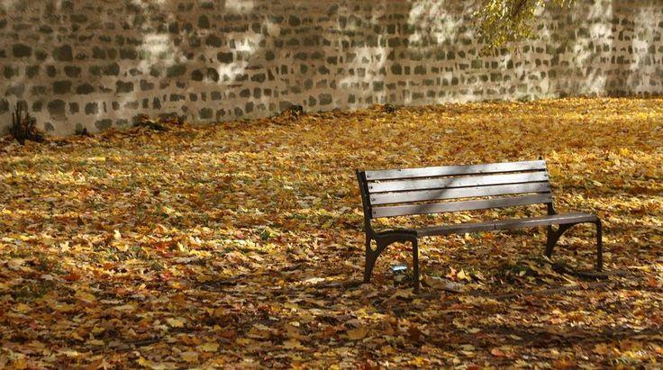 #podzim #herbst #autumn #bench #lavicka #yellow #czech_world #czech #czechrepublic #sudetenland #sudety #broumov #igraczech #igers #igerscz #czech_insta