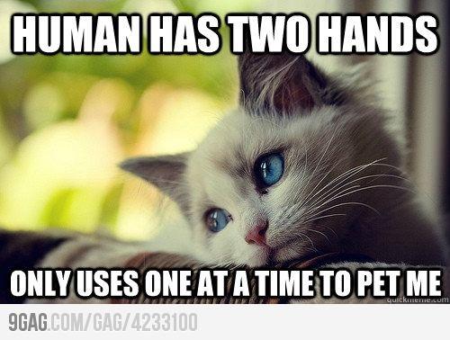 first world cat