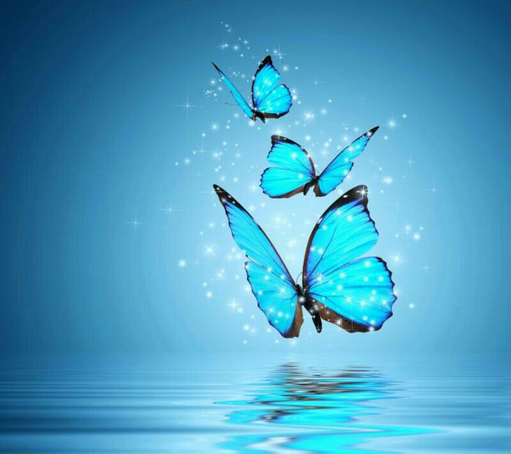 53 Best Images About Mariposas Azules On Pinterest