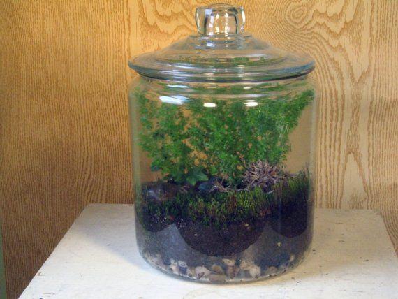 Terranium Plants And Stuff Pinterest Terrarium Plants And