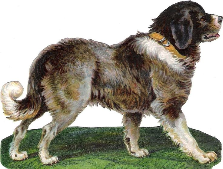 Oblaten Glanzbild scrap die cut chromo Hund dog 14cm chien