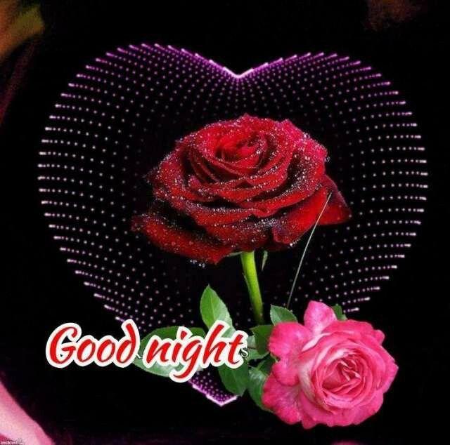 Good Night, Darling Daizo💗. おやすみなさい, 私野こい. 🌙🌹