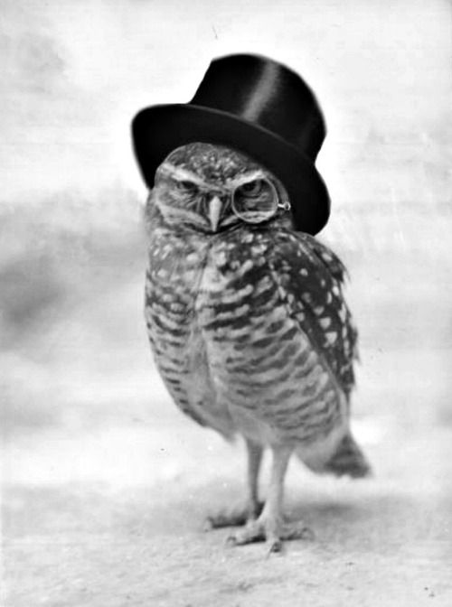 owlLittle Owls, Owls Tattoo, Like A Sir, A Tattoo, Top Hats, Burrowing Owls, Birds, Animal, Tops Hats