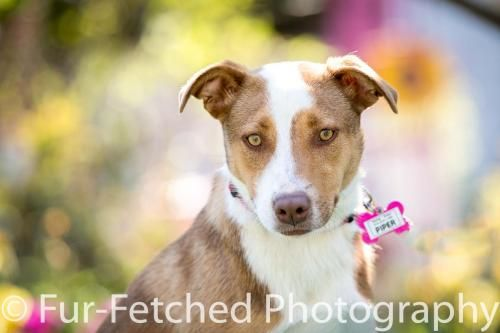 Saving Grace Rescue & Adoption - Our Dogs