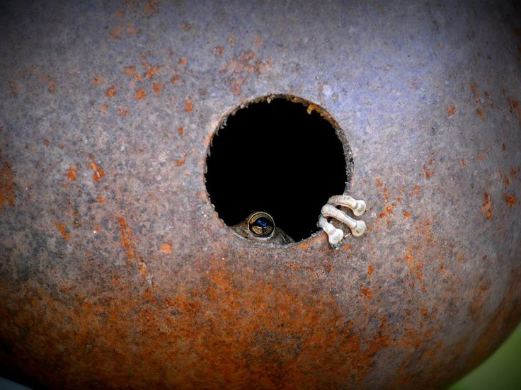 Frog Picture -- Animal Wallpaper -- National Geographic Photo of the Day