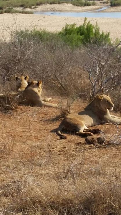 See it all on a trip to the Kruger Park. Contact us now and we'll arrange a day that won't be easily forgotten.