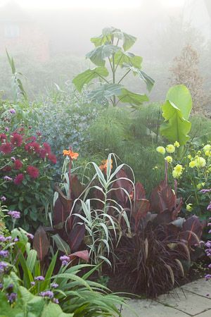 050818_008 Misty morning in the exotic garden at Great Dixter. Planting includes Paulownia tomentosa, Canna 'Durban', Cyperus papyrus and Ar...