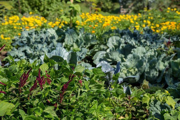 5+ Refined Shade Garden Design Zone 7 Ideas nel 2020