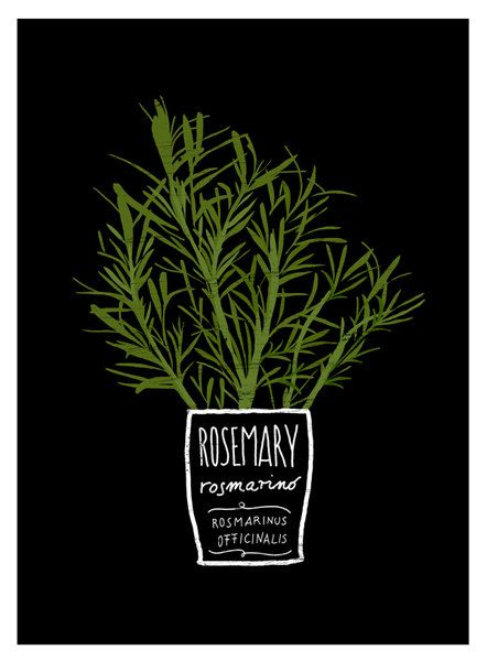 Could draw myself :)....  ROSEMARY Kitchen Art Print, Mediterranean Herbs Garden - Reproduction From Original Illustration