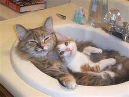 Welcome to the water cooler: Snuggles, Funnies Cats, Pet, Bathroom Sinks, Kittens, Hot Tubs, Kitty, Animal, Bath Time