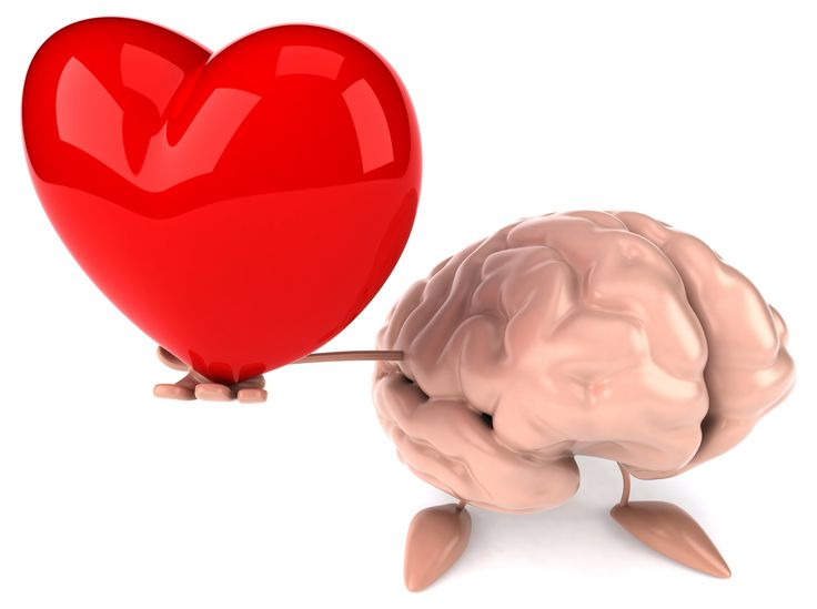 The Head and Heart Connection.  The Brain is the organ that governs all our body's system. Each and every single cell's activity is monitored and activated by the brain. Thus, the brain is called the control panel of all the systems working for a healthier body. Little did we know that the heart has it's own effect to the brain.