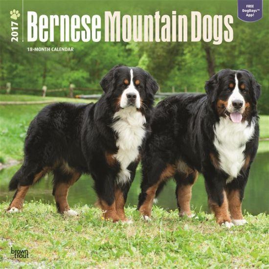Honden kalender 2017 Berner Sennen. Een luxe full colour kalender van 120 grams glossy papier met 13 verschillende kwaliteitsfoto's van uw favoriete rashond. Elke kalendermaand heeft ruimte voor uw persoonlijke notities. De kalender is circa 30 x 30 centimeter en heeft 24 pagina's.
