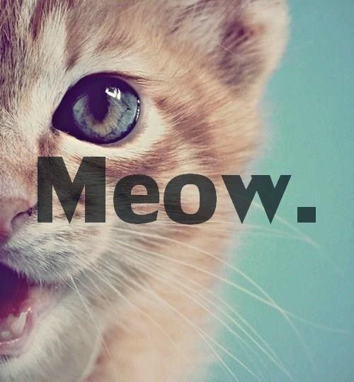baby cat ♥