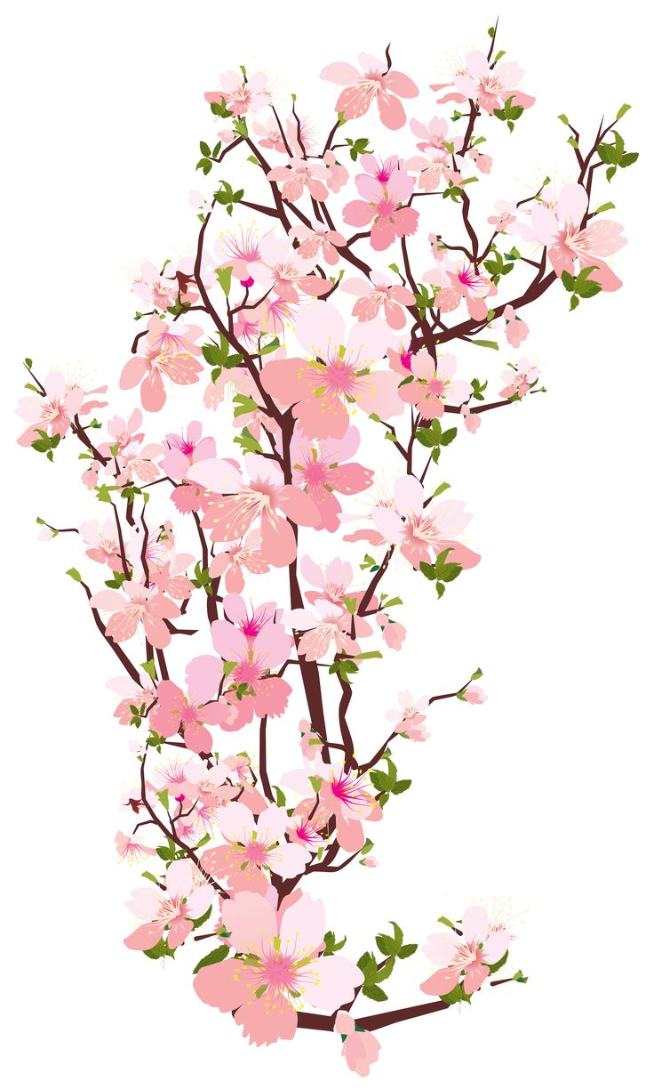 Spring Tree Branch Transparent PNG Clip Art Image | peach ...