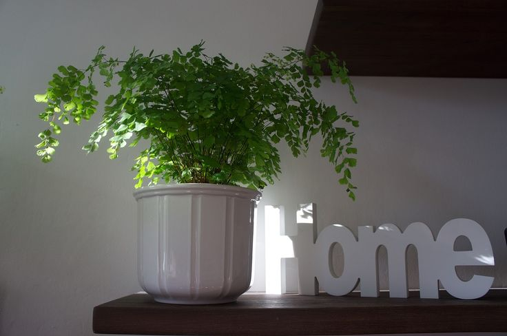 6 WAYS TO ADD Greenery TO YOUR HOME