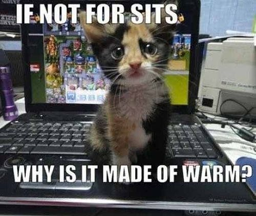 Need a Laugh? These Animal Memes Should Do the Trick!: Just about everywhere you turn there's a silly animal meme: advice animals, grumpy cats, and puns galore.