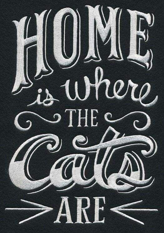 ☮ American Hippie ☮ Cat's Life