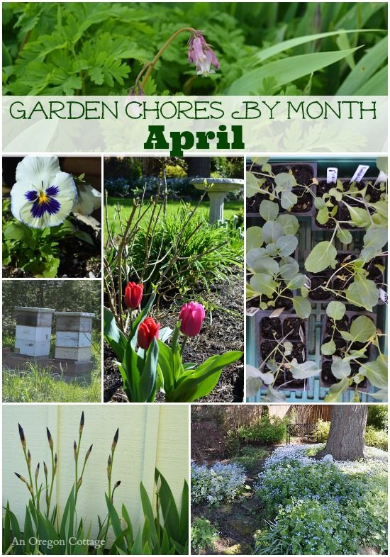 Get a jump on your spring garden with this useful list of April garden chores!