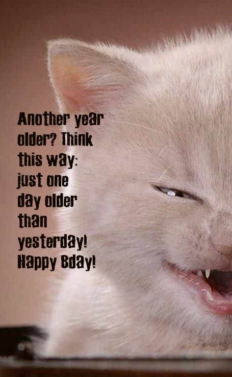 Funny happy birthday card with kitten picture