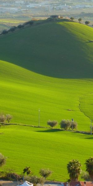 Amazing Snaps: Green Italian Pasture
