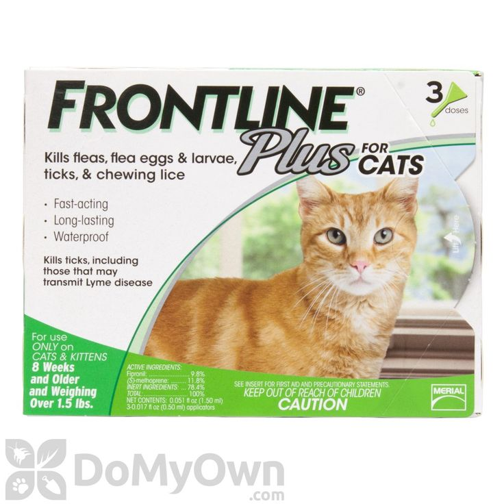 Frontline Plus For Cats - Monthly application will keep your cat flea and tick free!