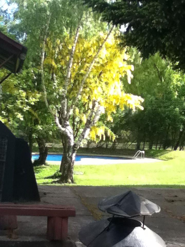 Árbol jardín hotel coyhaique, realmente hermoso