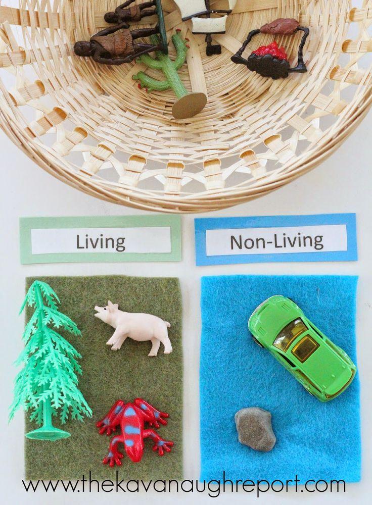 Sorteren, categoriseren en meer - Bekijk Montessori Math and Science Trays