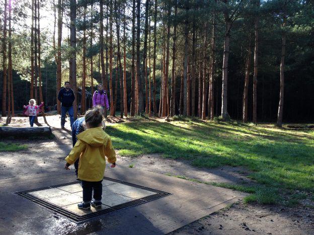 Thetford forrest grufallo trail