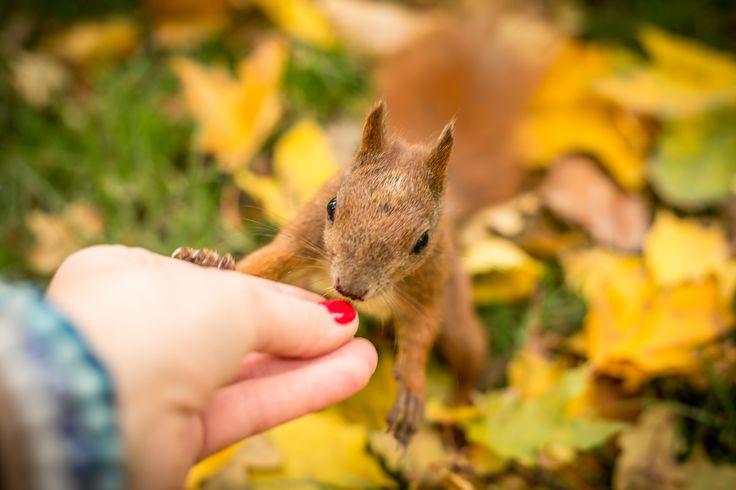 #squirrel #squirrels #squirrellove #squirrellife  #wiewiórka #autumn #jesień
