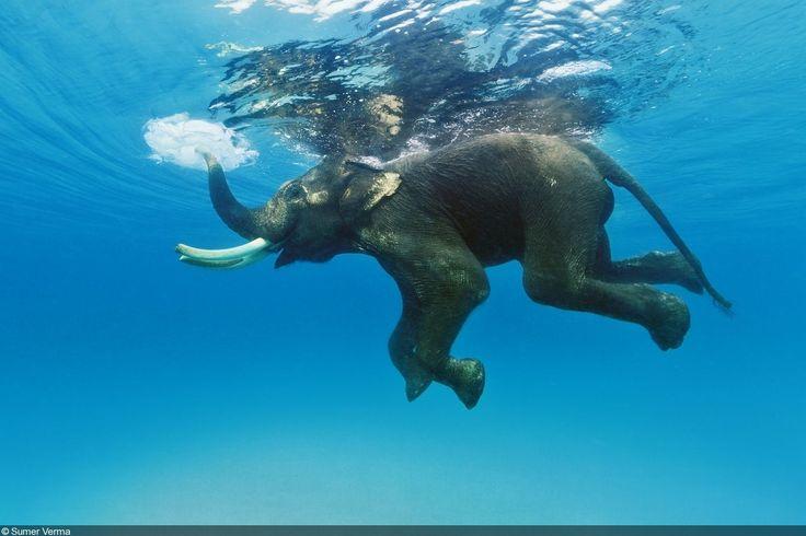 5 Famous Animals You Should Meet!
