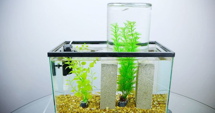 36 best home design images on pinterest interior design for Above water fish tank
