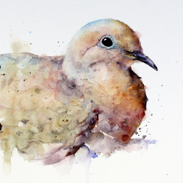MOURNING DOVE Original Watercolor Painting by door DeanCrouserArt