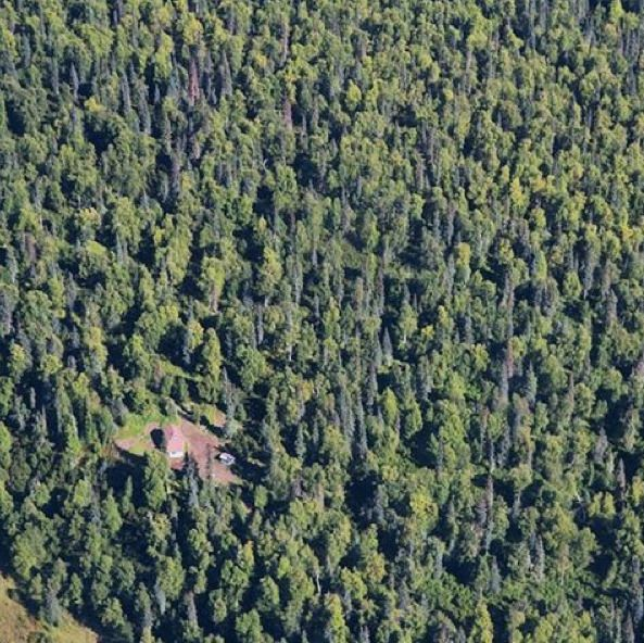 Isolated house in Alaska's backcountry surrounded by trees - only reachable by float plane or boat