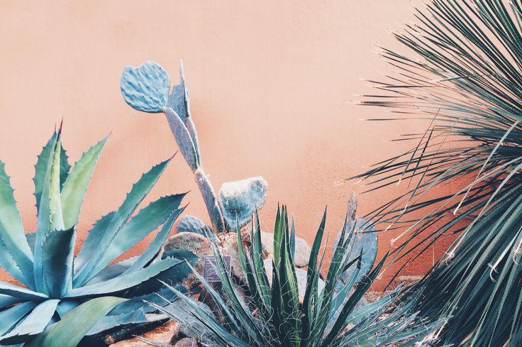 Plantlove by HyperJulia