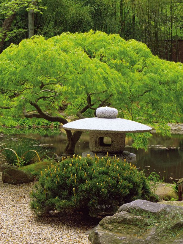 Japanese garden.  I'm hoping this is harmony!  You have the repeating curvy shape of the tree, the bush, and the garden sculpture.  The different element would be the man made sculpture vs nature, but it still works due to the shape.