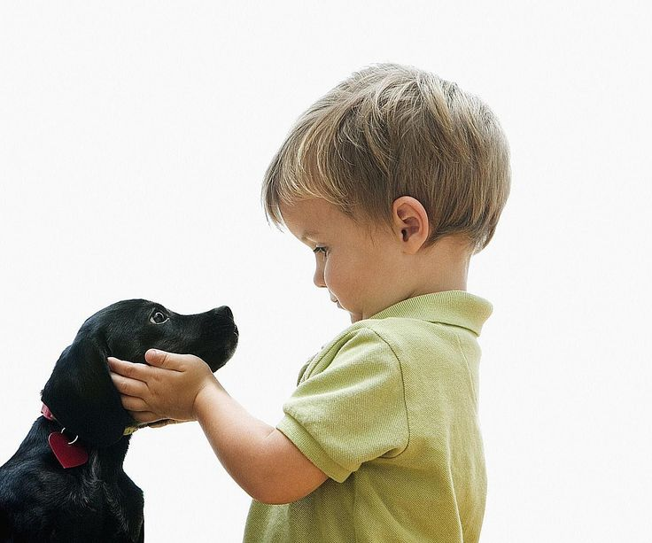 This article offers helpful tips on how to introduce puppies to kids toddlers and includes safety tips and behavior advice to ease the introduction.