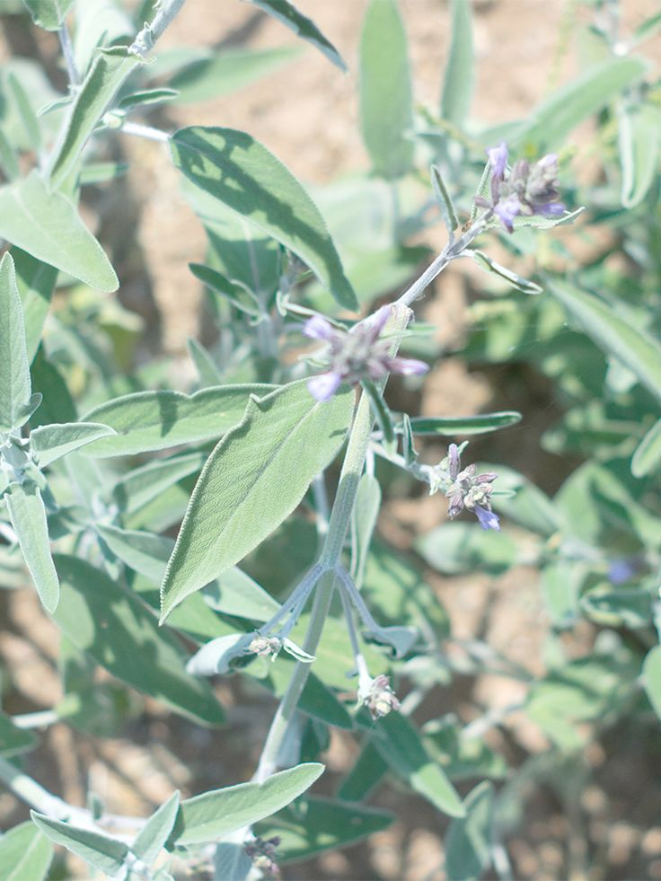 Tzekos Organic Herbs | our land