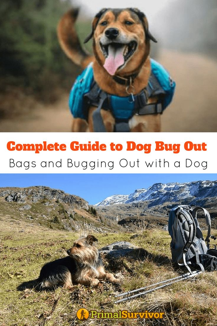Complete Guide To Dog Bug Out Bags And Bugging With A Survival Prepper Tips Pinterest Bag Dogs