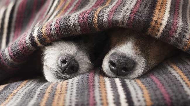 10 chiens et chats endormis   Galeries d'images   Art de vivre   Canoe.ca