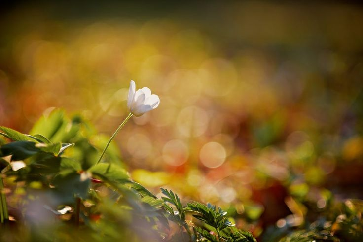 Wild Flower by Dave Tickell on 500px