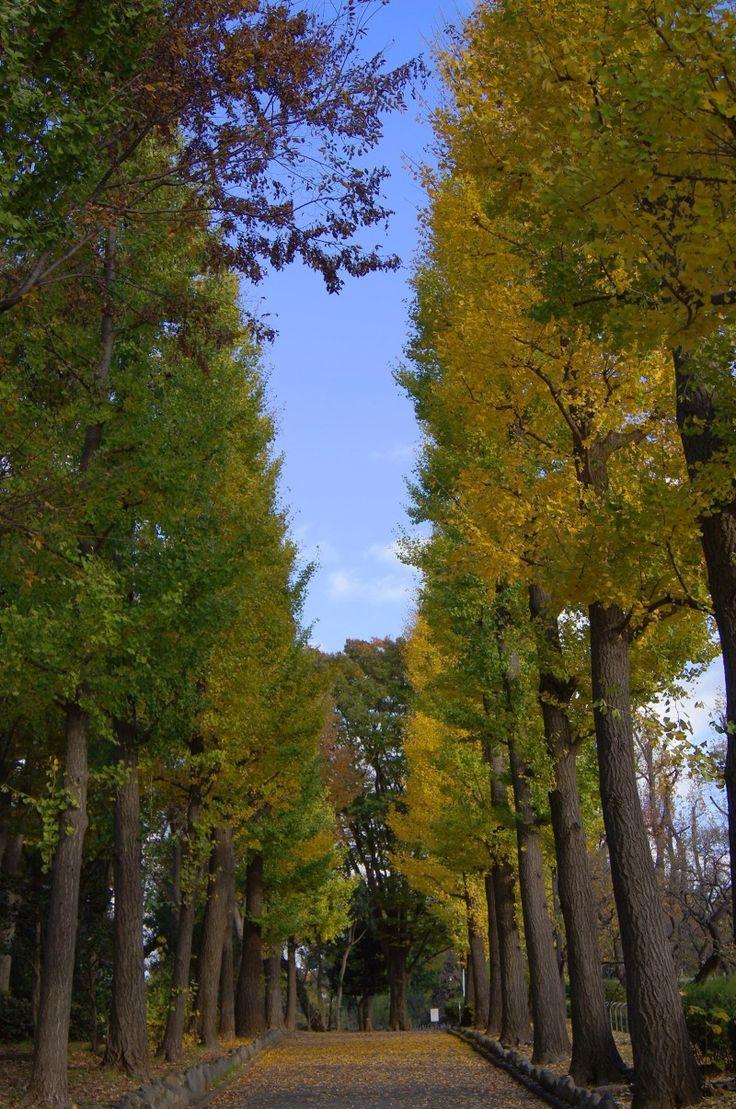 井の頭線東松原駅から徒歩7分。銀杏並木が美しい。東松原駅近くの羽根木公園。井の頭線のおすすめスポット