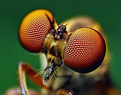 The Comprehensive Guide To Macro Photography