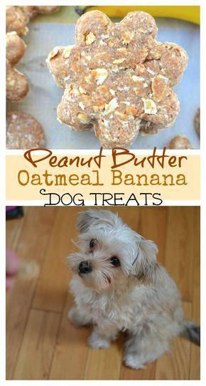 Peanut Butter Oatmeal Banana Dog Treats Dogdiyhacks Pet Stuff
