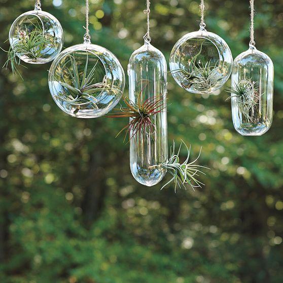 air plants & glass vessels