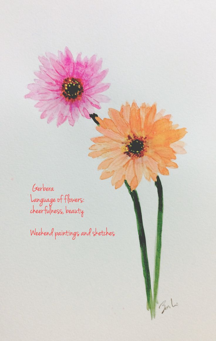 Gerbera Watercolours Paper:Winsor & Newton COTMAN 227 x 158mm