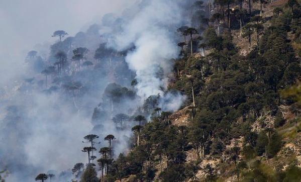 La verdad incómoda del bosque nativo